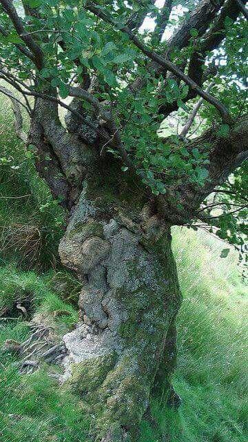 Мъдростта на дървото