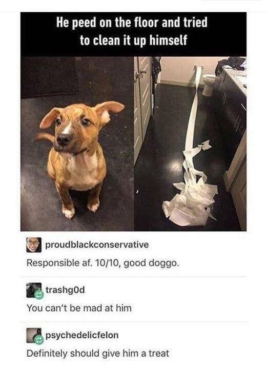 22 Dogs That Prove We Don T Deserve Dogs Funny Animals Animal Memes Cute Funny Animals