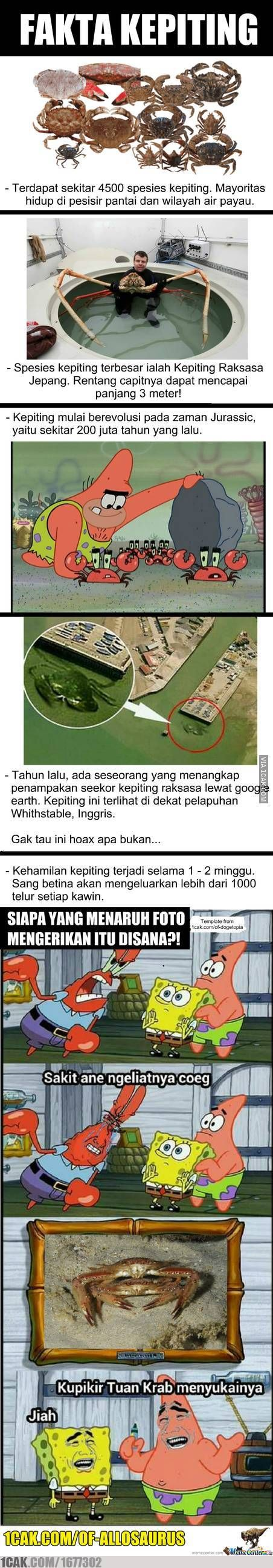 Fakta Kepiting Meme Comic Indonesia Pinterest