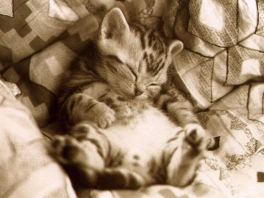 sleepy baby animals | heart animals: Cute Sleepy Animals