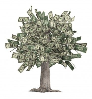 """See Mom???  Money really DOES grow on trees  --OR-- There really is such a thing as a """"money tree"""""""
