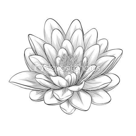 Schwarze und weiße Lotusblüte in Grafikstil isoliert lackiert — Stockillustration #43174705