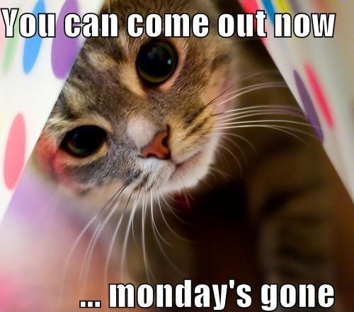 You can come out now Mondays over funny quotes kitten monday days of the week humor monday quotes: