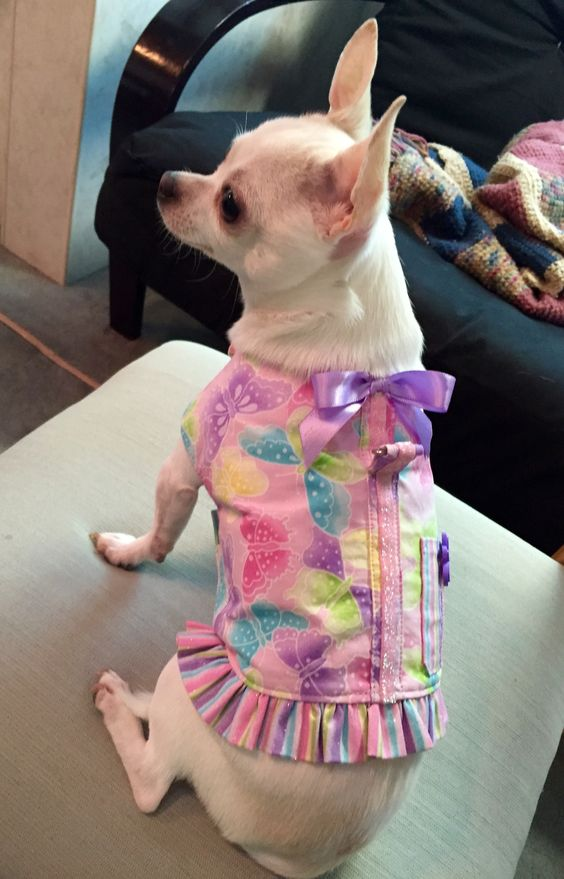 Her new butterfly harness from http://www.wagglewear.etsy.com. She loves it!