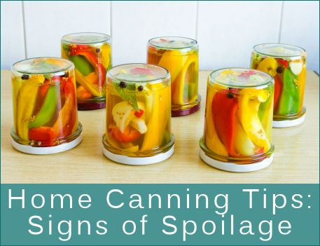 Home Canning ~~ Definitions Guide & Signs Of Spoilage