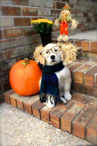 PetsLady's Pick: Cute Nerdy Halloween Dog Of The Day...see more at PetsLady.com -The FUN site for Animal Lovers