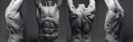 amin-akhshi-torso-sculpting.jpg (1920×610)