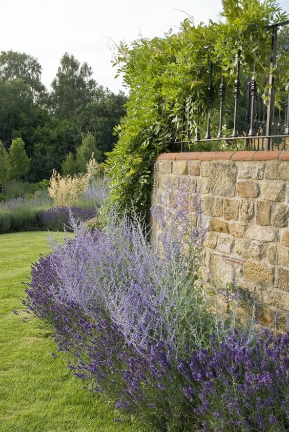 Lavender And Russian Sage Against Stone Wall. Acres Wild
