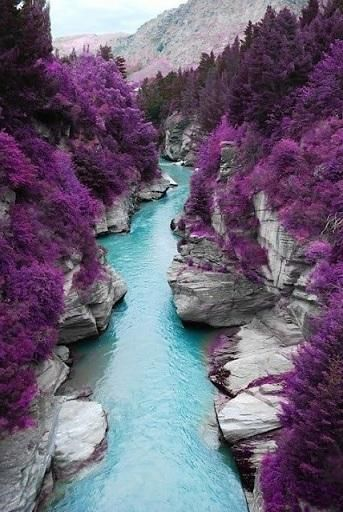 PURPLE TREES AND THE STREAM -:
