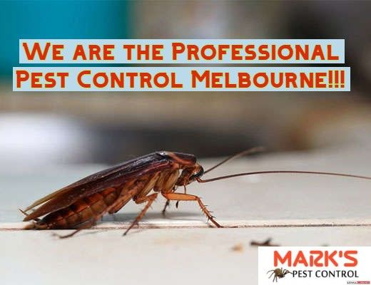 How To Get Rid Of Cockroaches Important Steps Pest Control Pest Control Services Melbourne