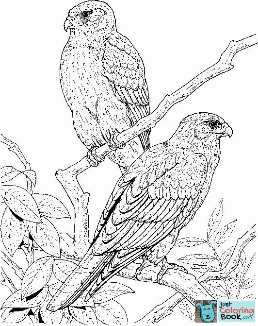 Falcons Coloring Pages Free Coloring Pages For Download Gyrfalcon Coloring Pages Bird Coloring Pages Animal Coloring Pages Elephant Coloring Page