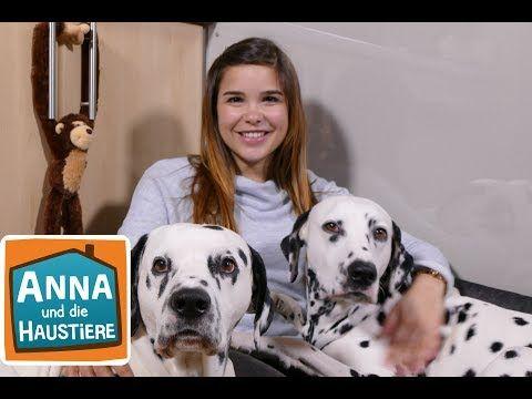 Dalmatiner Information Fur Kinder Anna Und Die Haustiere Youtube In 2020 Haustiere Wilde Tiere Dalmatiner