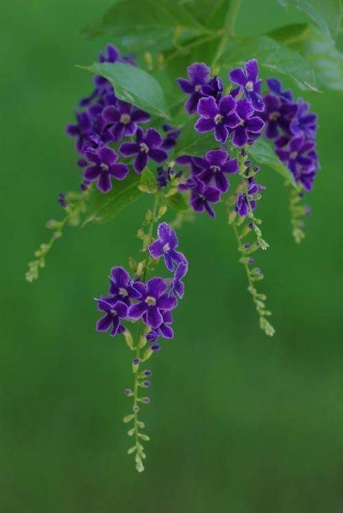 Gloria arcas gods creations2 pinterest explore little flowers small purple flowers and more mightylinksfo Images