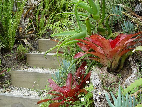 Bromeliads and succulents either side of one of the
