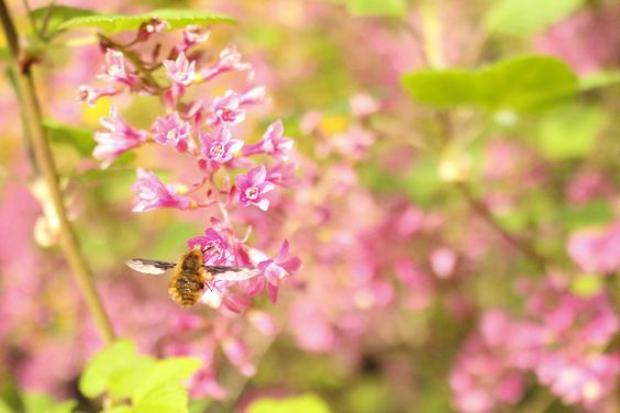 Summer bee  http://gabrielle93t.wixsite.com/itsgabriellethompson/photos
