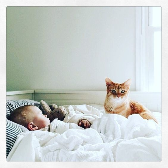 What I Wish I Had Known Before I Brought Home A Kitten Baby Sleeping Baby Pictures Baby Love