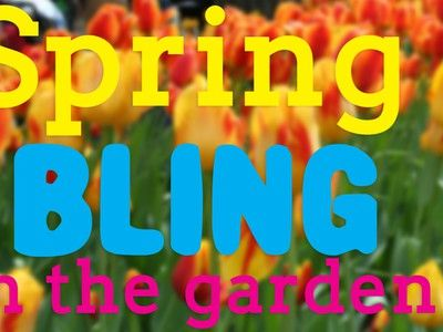 Spring Blooming Bulbs You Should Plant this Fall