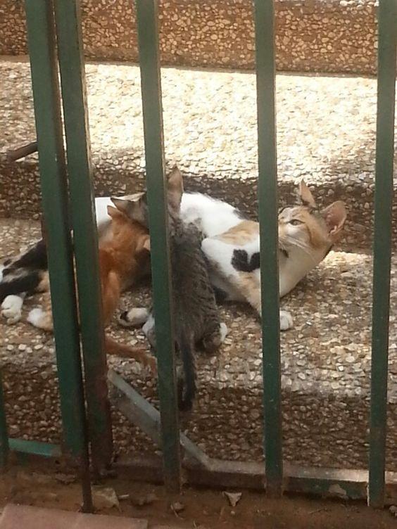 חתולה מניקה שני גורים