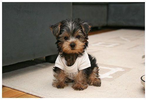 Awww.... I want one!