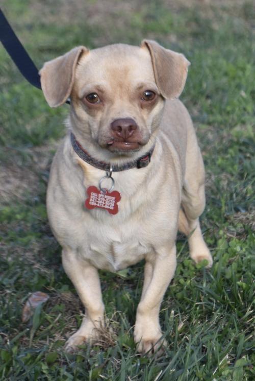 Dogs For Adoption Petfinder Dog Adoption Pet Adoption Animal Projects