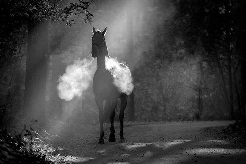 Le cheval fantôme Bcc4a055eb24738ed3749d1ebc296ebd