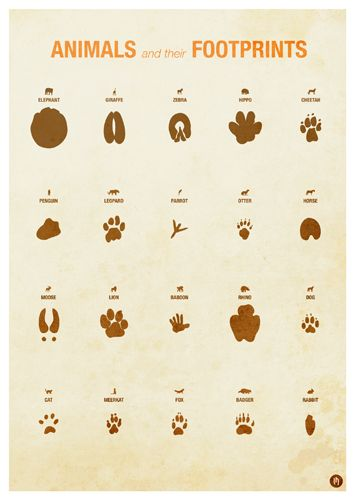 Zoo Animal Infographic Posters by Laura Hobson, via Behance ...