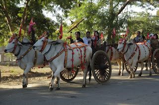 A procession of beautifully decorated cows  on the streets of Bagan, Burma.