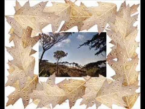 Osibisa - The Dawn Live
