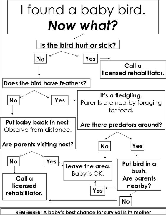 Wild Birds Unlimited: The Baby Bird Dilemma: What to do with a Bird That's Left the Nest Too Early?