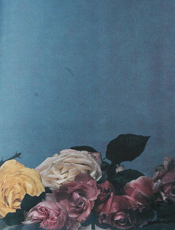 FLOWER-112215x05