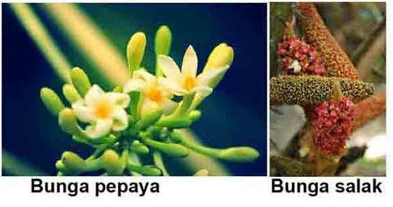 Gambar Bunga Sempurna Dan Bunga Lengkap Bagian Bagian Bunga Dan Fungsinya Juragan Les 10 Bagian Bagian Bunga Dan Fungs Bunga Menggambar Bunga Kembang Sepatu