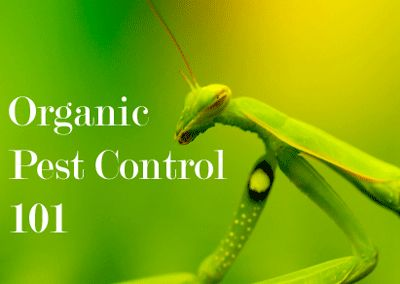 Organic Pest Control.  Soapy water, oily water, hot pepper water, garlic water, & combination sprays.