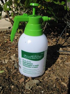 Homemade Pesticides Garden Pinterest Homemade And Organic Pesticides