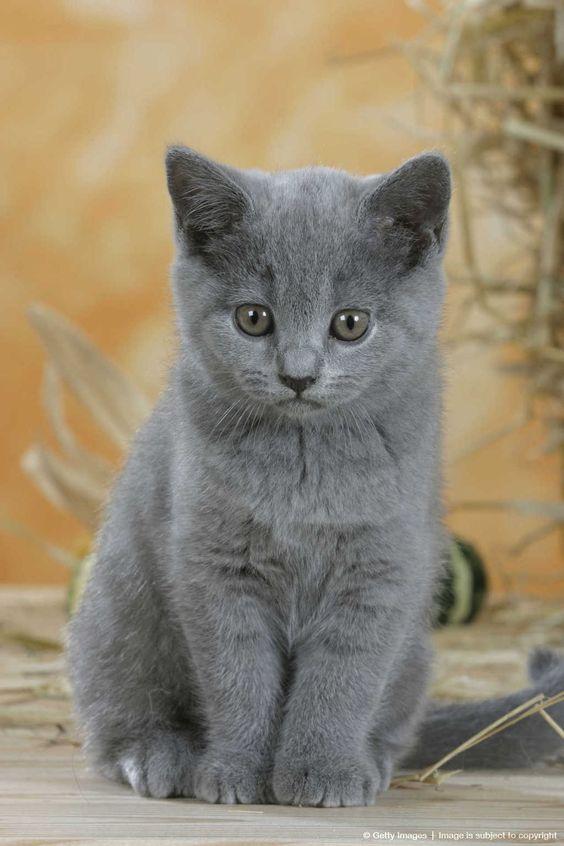 grey kitten wallpaper 294 - photo #45