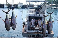 TOPSHAPE charters Kona Hawaii..MY HOMETOWN!! I actually know these people..they are awesome!!