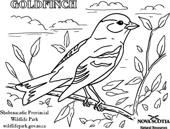 Willow Goldfinch Coloring Page