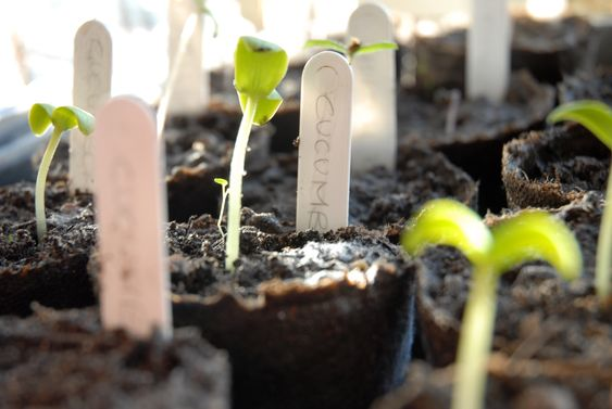 Starting your garden from seed? Here are a few tips!  Get your garden started earlier, even in cold weather climates!
