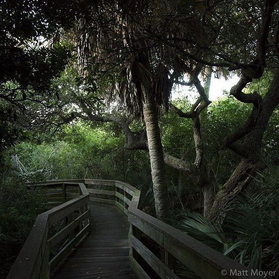 Photo by @mattmoyerphoto // (1 of 8) Here is the first of several photos Ill be posting from my recent assignment in Florida as I take over @natgeotravel for the day. // An elevated nature trail cuts through the lush canopy of Canaveral National Seashore