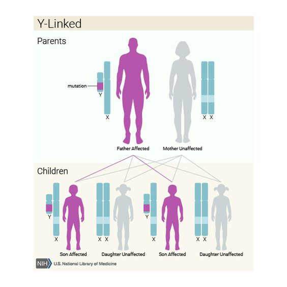 Y-linked | What are the different ways in which a genetic condition can be inherited? - Genetics Home Reference: