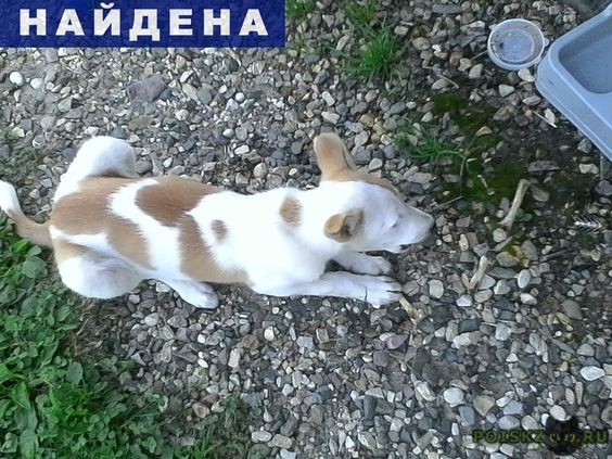 Найдена собака щенок г.Ярославль http://poiskzoo.ru/board/read28571.html  POISKZOO.RU/28571 Бегает ..-й день щенок. Возраст примерно .. месяца, самка, окрас бело- рыжая, не крупная. Ищем хозяина или новый дом для щенка.   РЕПОСТ! @POISKZOO2 #POISKZOO.RU #Найдена #собака #Найдена_собака #НайденаСобака #Ярославль