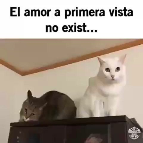 Amor De Mi Vida Amor De Mi Vida Borrachos Humor