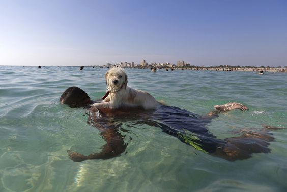 A dog named Lucky gets a ride on the back of his owner near the beach in the southern port city of Tyre, Lebanon, on September 20, 2015. #  Hopeful Images From 2015 - The Atlantic