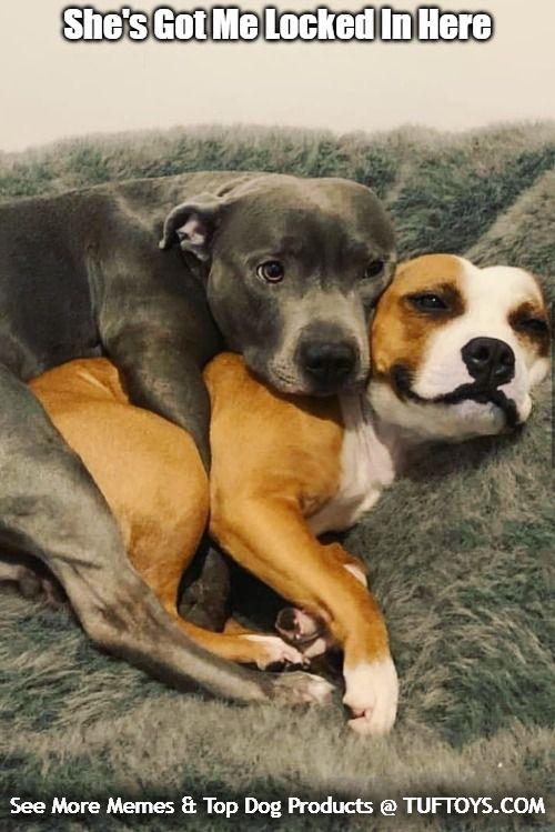Labradorpuppybreeders Pitbull Mix Puppies Lab Mix Puppies