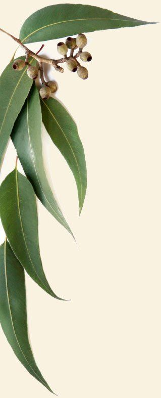 Giday Horse Rugs Eucalyptus leaves and gum nuts gum leaf
