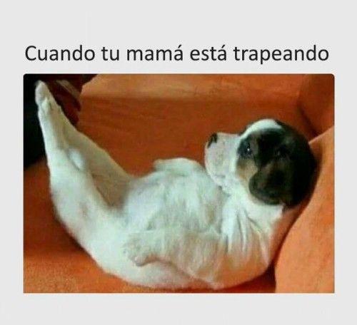 Frases Con Doble Sentido Chistosas Y Cortas Para Whatsapp Funny Animal Memes Memes Animal Memes