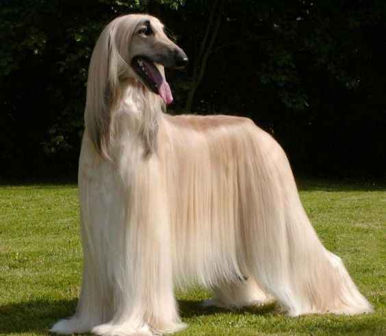 What's the cheapest dog breed? Most expensive?
