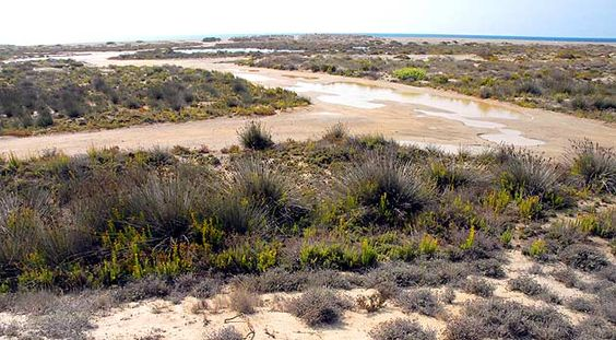 Paraje Natural Punta Entinas-Sabinar, en Waste magazine: