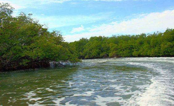 Manglares de Estero Balsa, Parque Nacional Montecristi, R.D.