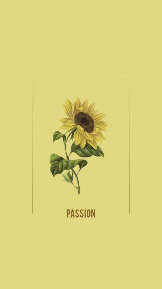 Flower Samsung Wallpaper Tumblr Flower Sunflower Wallpaper