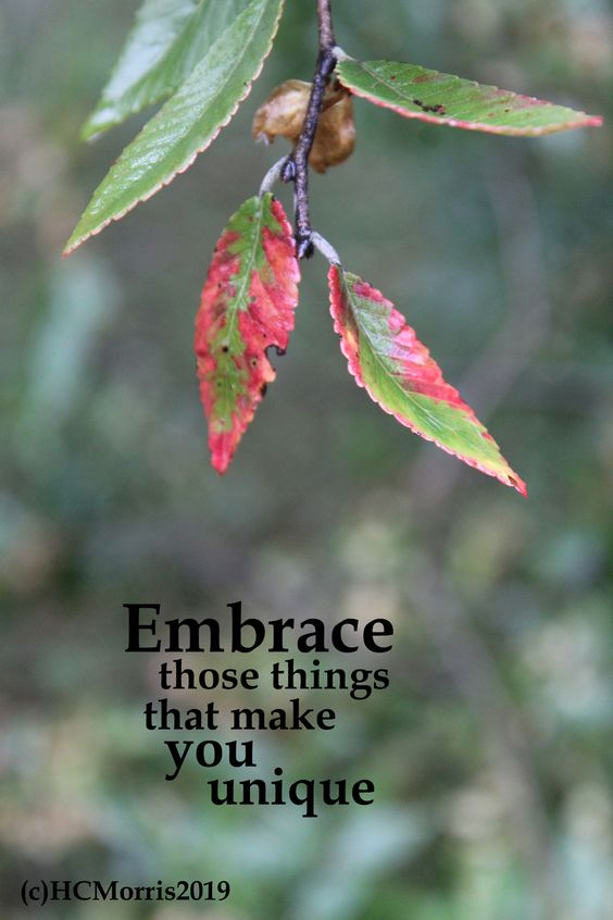 red and green elm leaves with embrace the things words